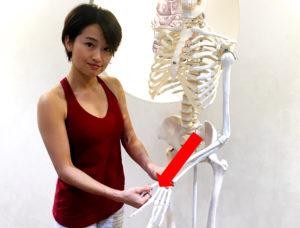 疲れない体を作るホネナビBJ体操