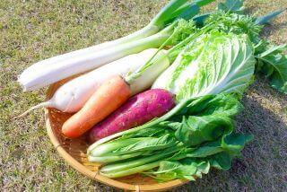 ぬか漬け初心者でも自宅で簡単 「発酵ぬかどこ」でぬか漬けデビュー 適した野菜