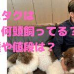木村拓哉 工藤静香 cocomi koki 犬 何匹 何頭 名前 性別 犬種 種類 エトワール ヒカル アムール バブル
