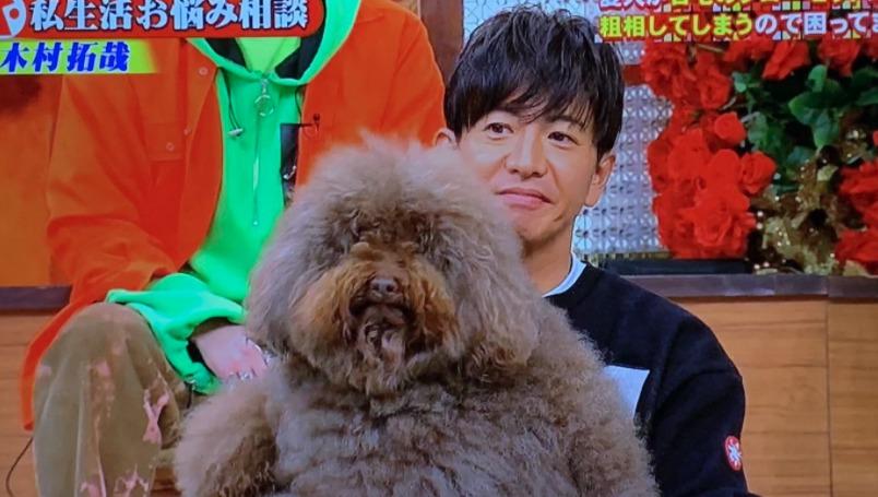 木村拓哉 犬 アムール